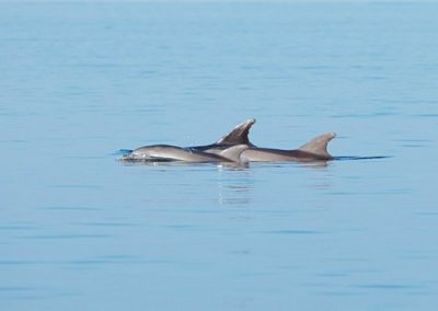 sup-dolphin-tour-losinj